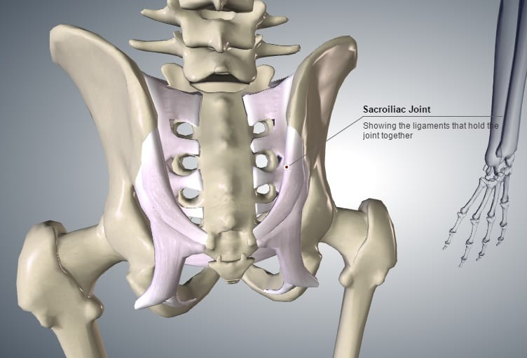 """Sacroiliac joint (""""SIJ"""") showing the main ligaments."""